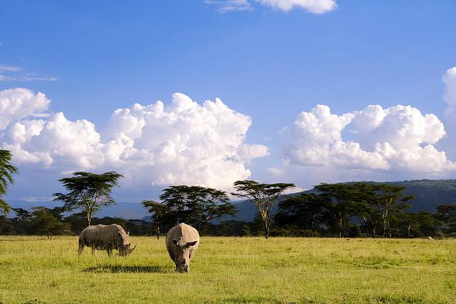 Сафари парк в африке