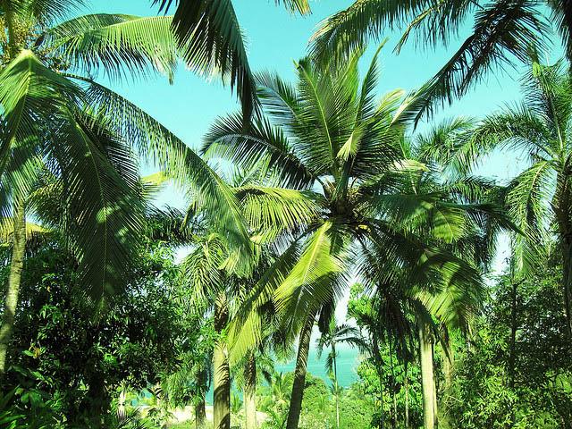 Где лучше отдыхать: на Северном или Южном Гоа