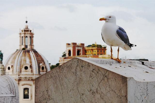 Что посмотреть за 1 - 2 - 3 дня в Риме