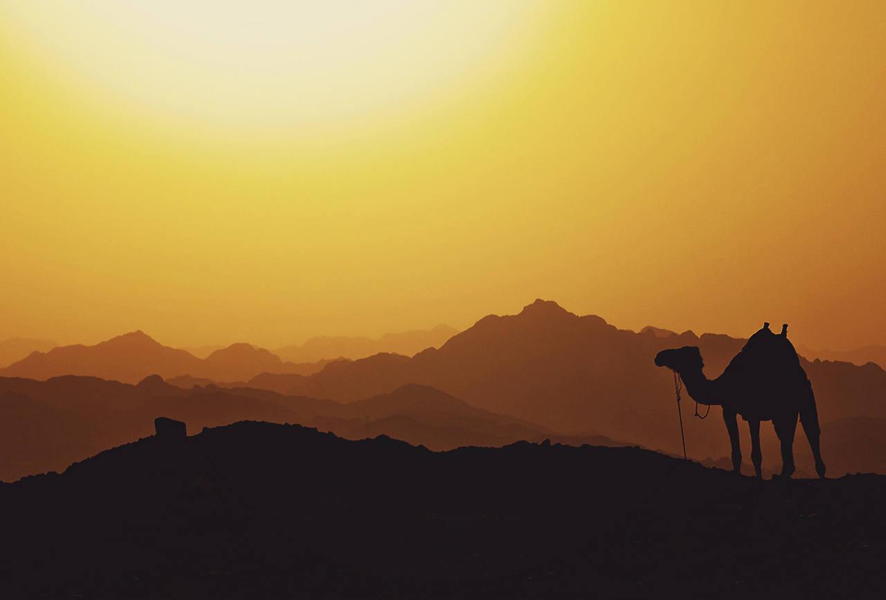 Отдых в Египте на море летом 2021