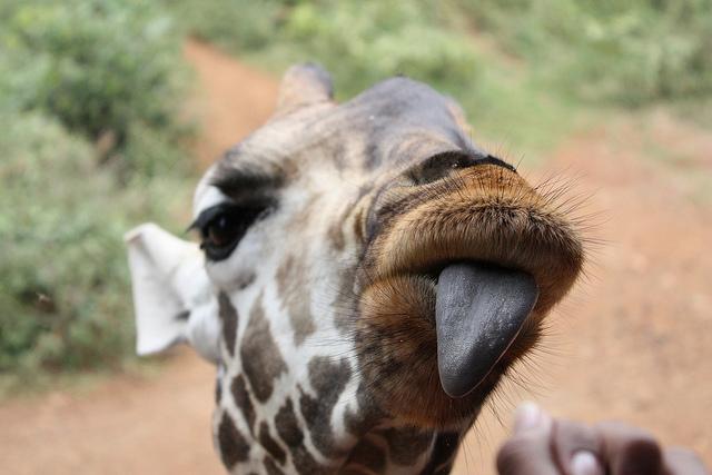 что посмотреть в кении
