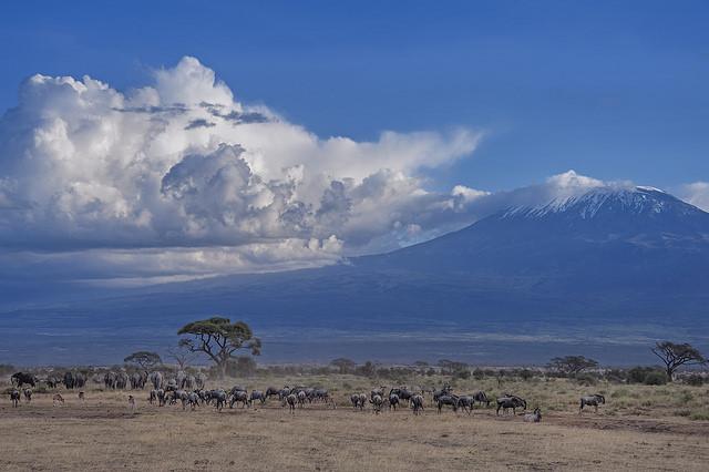 сафари в африке - туры в кению