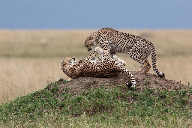 национальные парки африки и кении