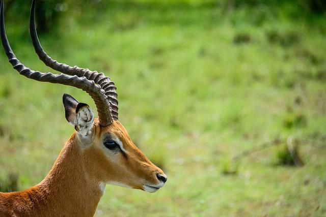 парки в кении африке