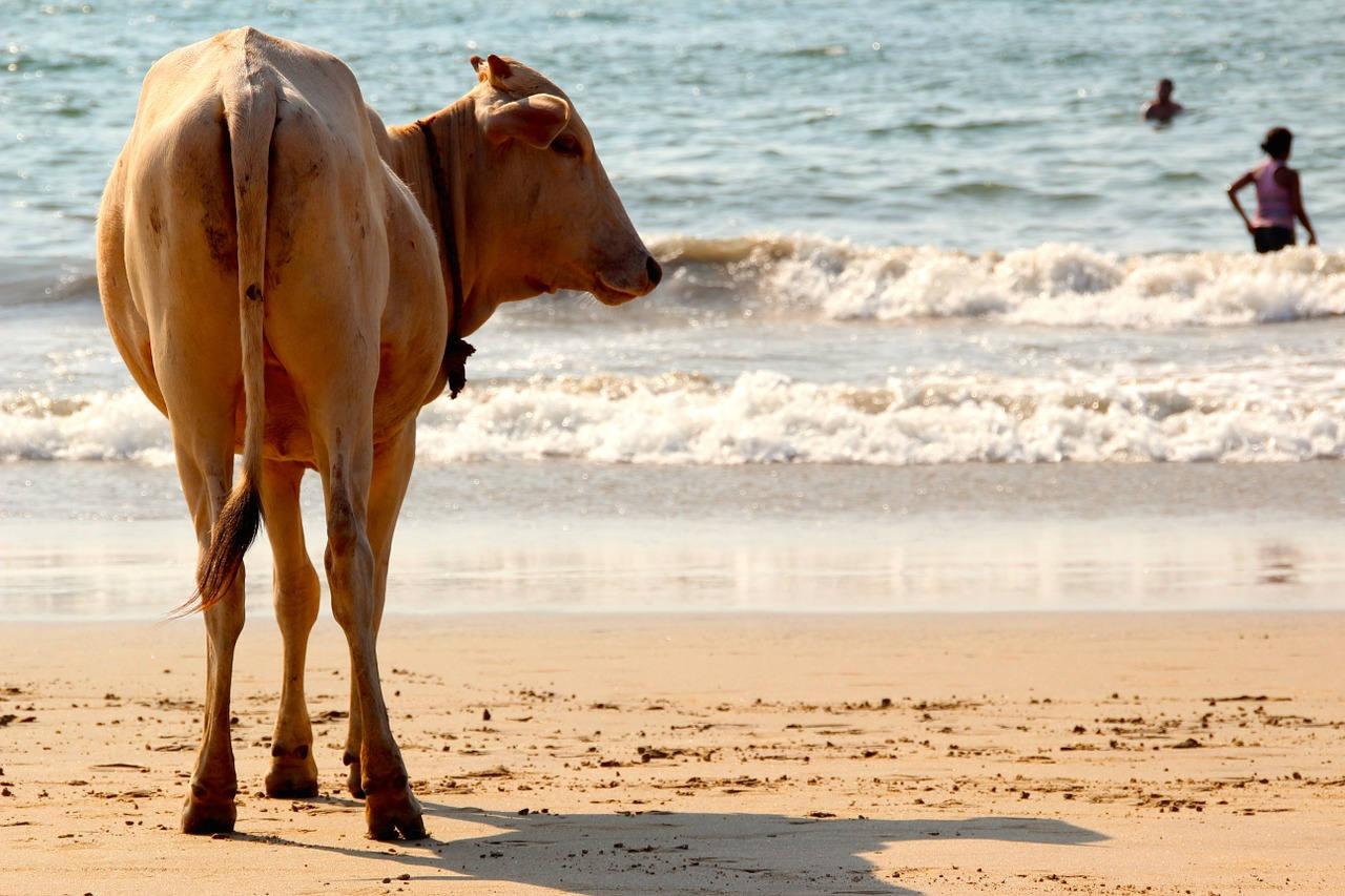 Отзывы и советы туристов об отдыхе в Гоа