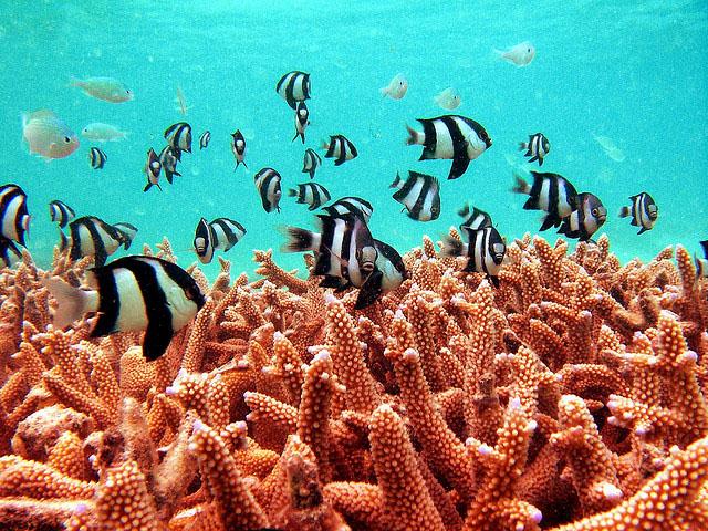 новый год на мальдивских островах