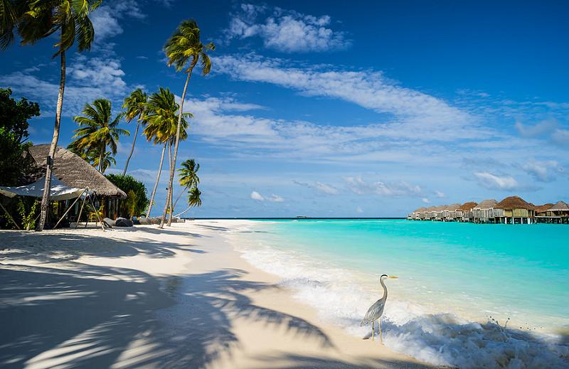 лучшие отели мальдив для отдыха с детьми