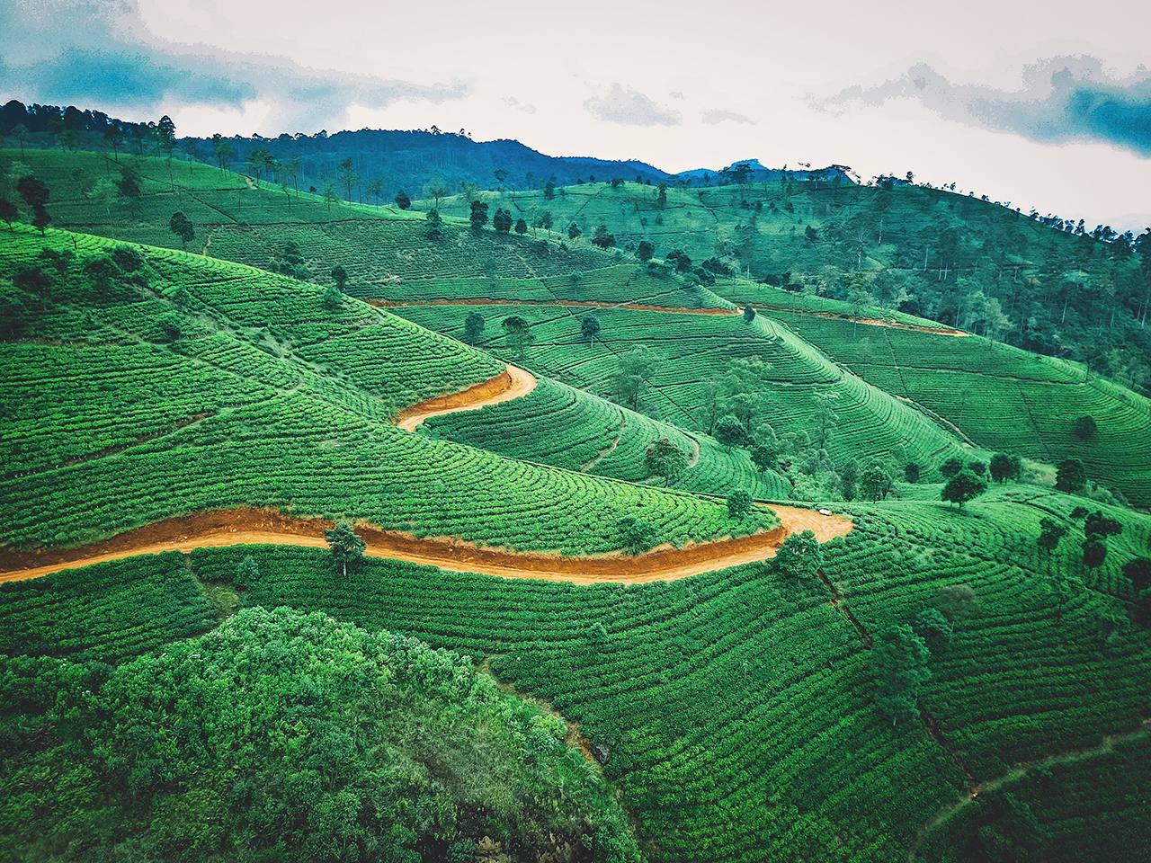 Что привезти в подарок из Шри-Ланки