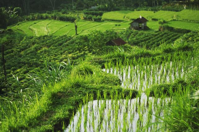 индонезия стоимость визы