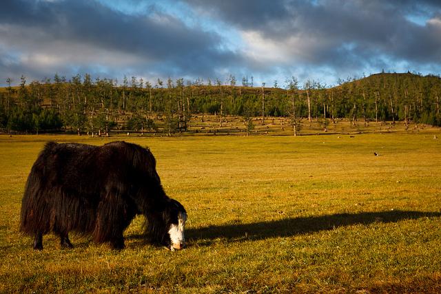 Пейзажи Монголии. Природные ландшафты мира. Самостоятельные путешествия.