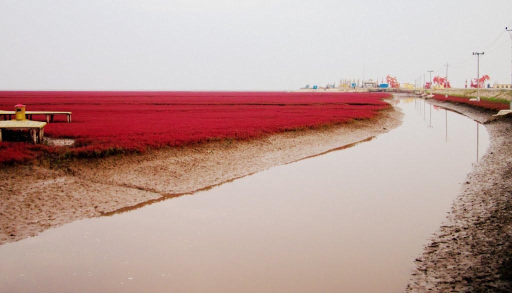 Красный пляж в Китае. Уникальные места. Самостоятельные путешествия.