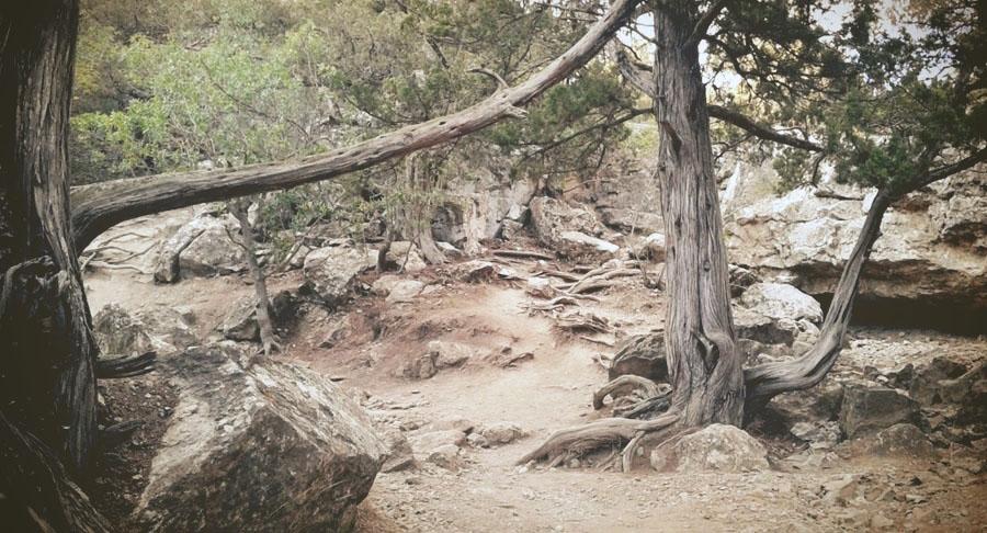 леса крыма можжевельник дуб