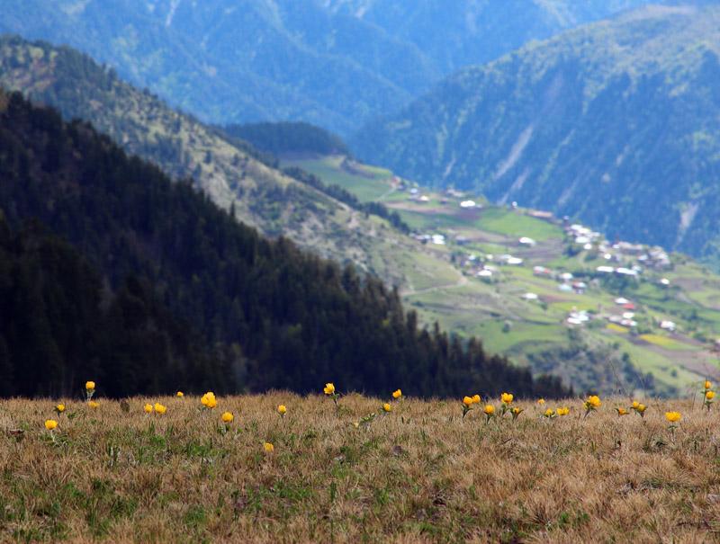 Грузия. Первые цветы Сванетии.