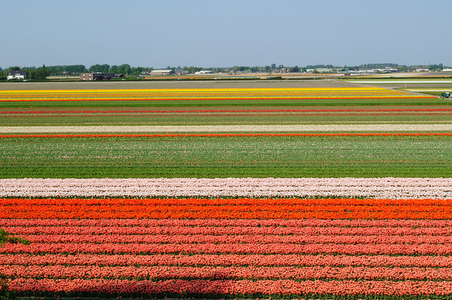 пейзажи нидерландов кёкенхоф