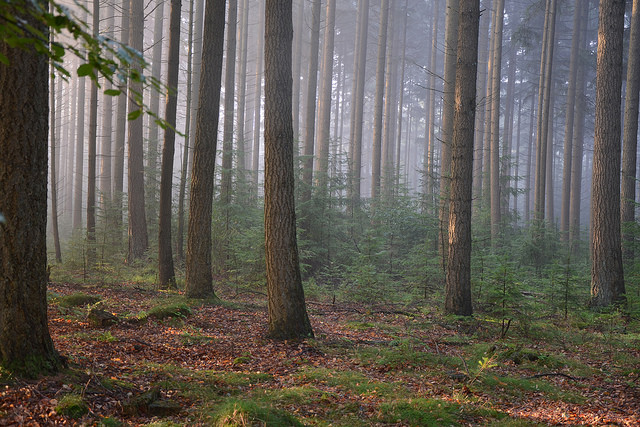 пейзажи нидерландов - boswachterij exloo
