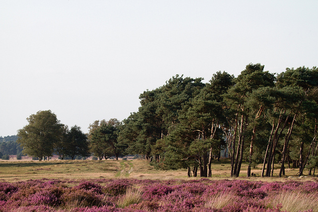 пейзажи нидерландов - национальный парк