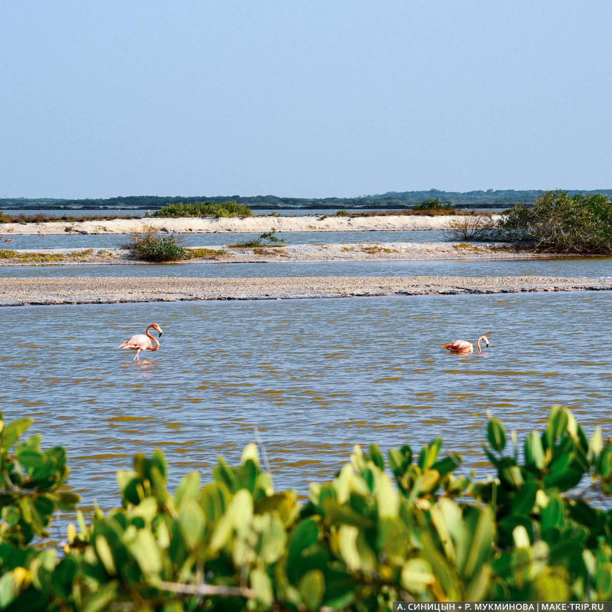 Где посмотреть на фламинго в Мексике