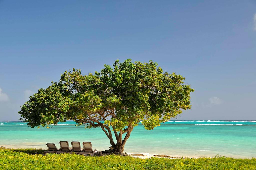 Цены на отели в Доминикане