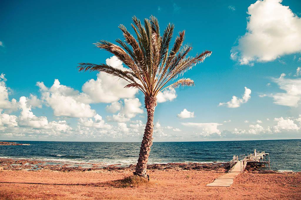Встретить Новый год на море на Кипре