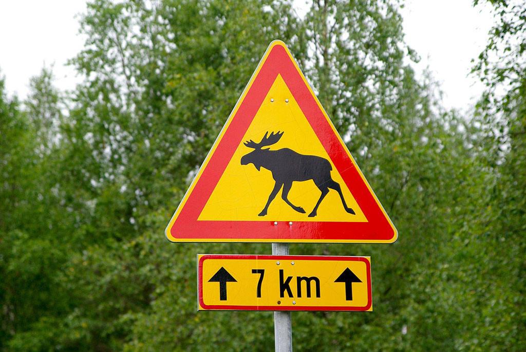 Нужные документы при поездке в Финляндию на машине