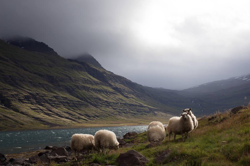 Что привезти из Исландии