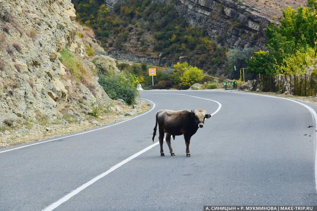 Самостоятельная поездка в Дагестан