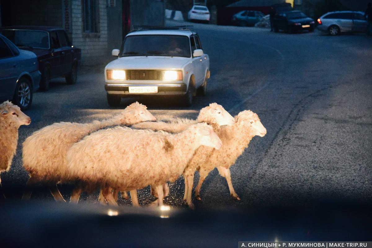Самостоятельно в Дагестан