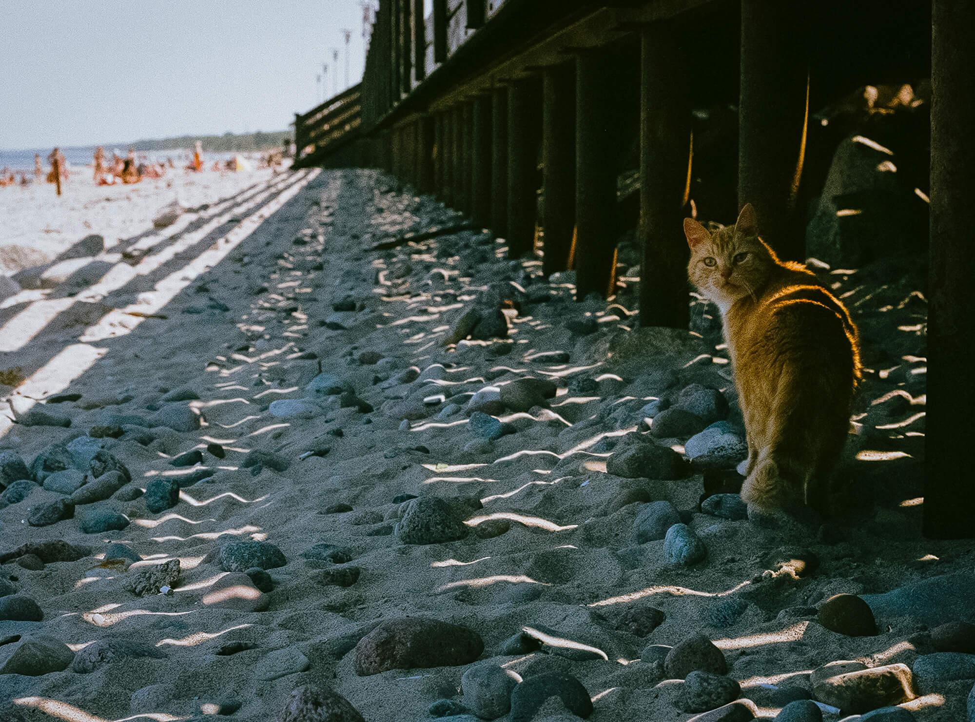 Что посмотреть за пределами Калининграда