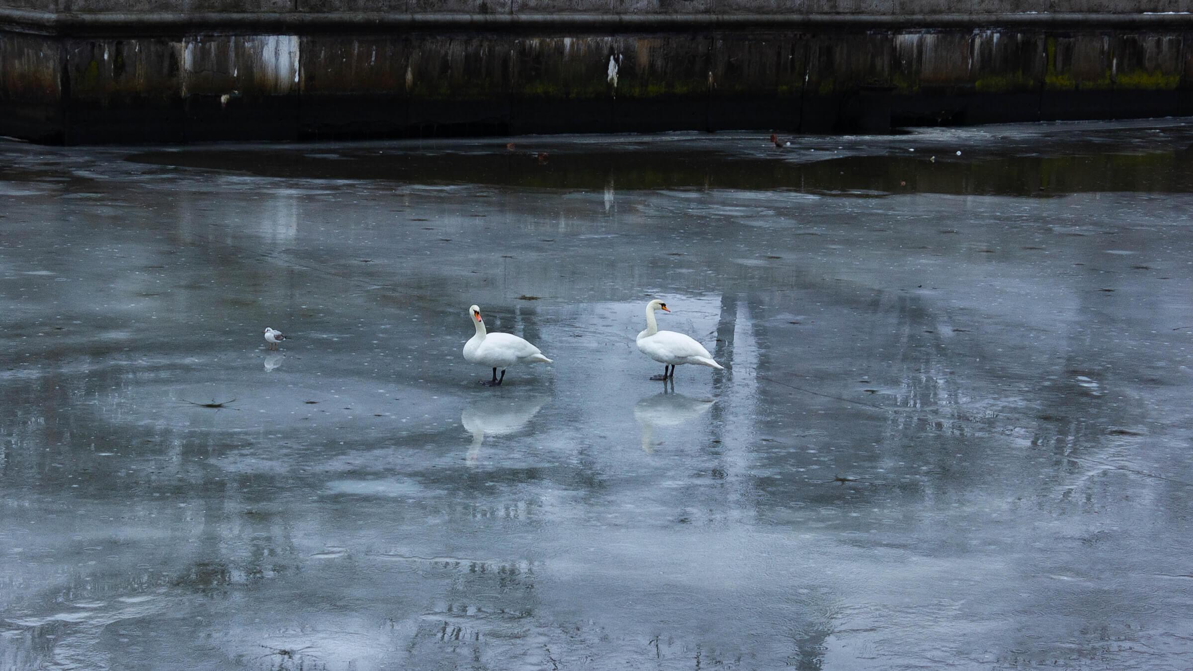 Что посмотреть в Калининграде зимой