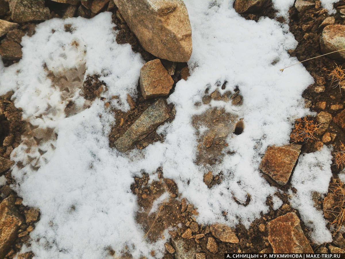 Следы медведя в районе Домбая