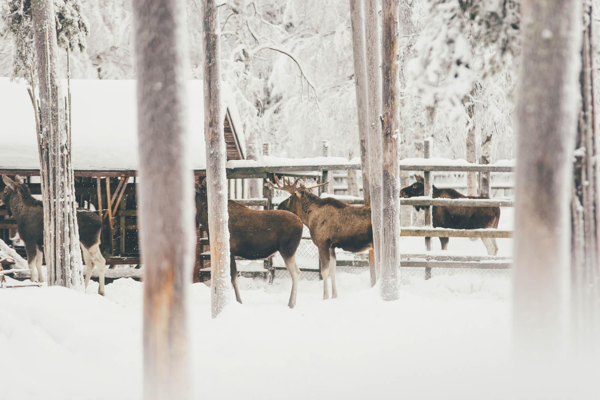 Куда сходить зимой в Петербурге