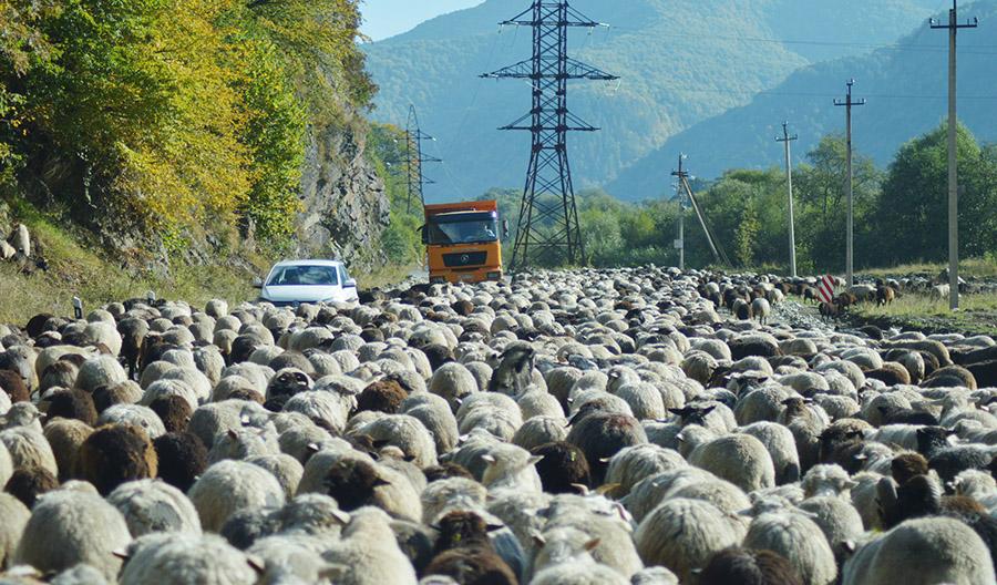 путешествия по россии на машине отзывы