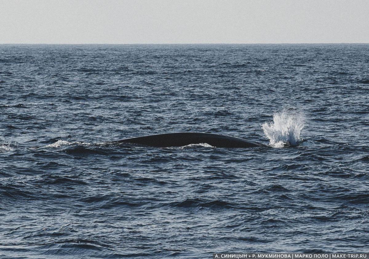 киты на шри-ланке