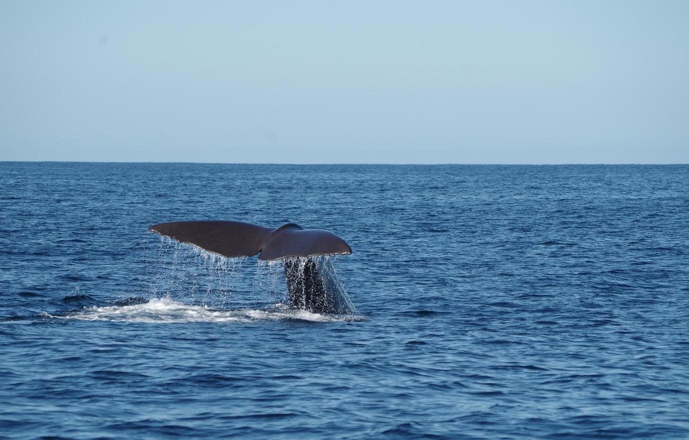 наблюдение за китами на шри ланке