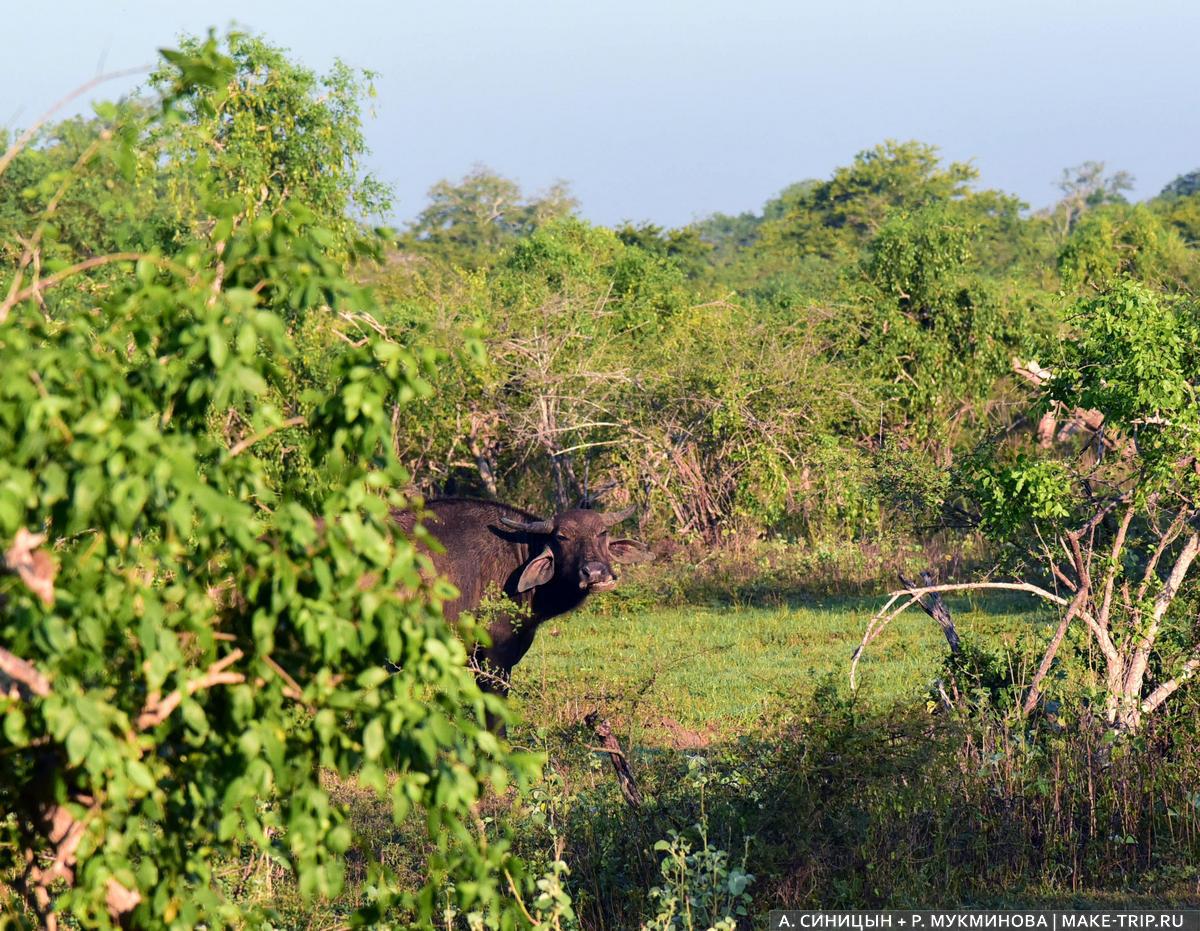 Шри-Ланка сафари на джипах