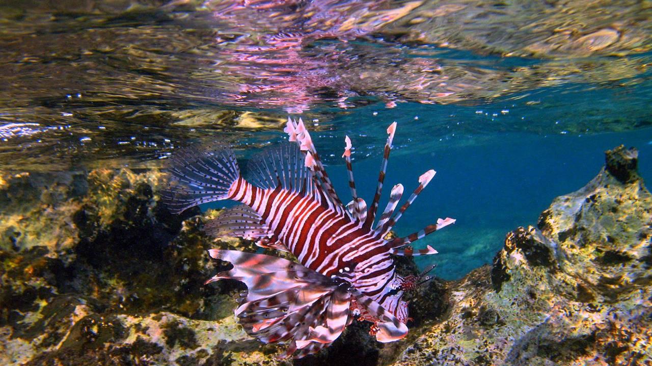 Опасные рыбы в Таиланде