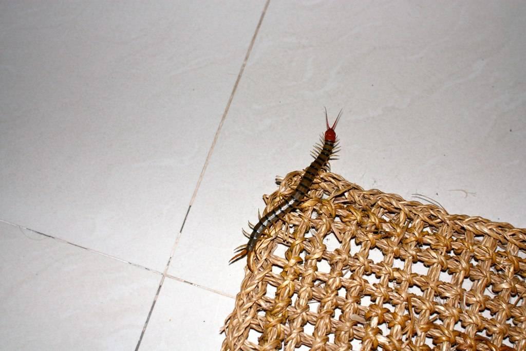 Опасные насекомые в Таиланде