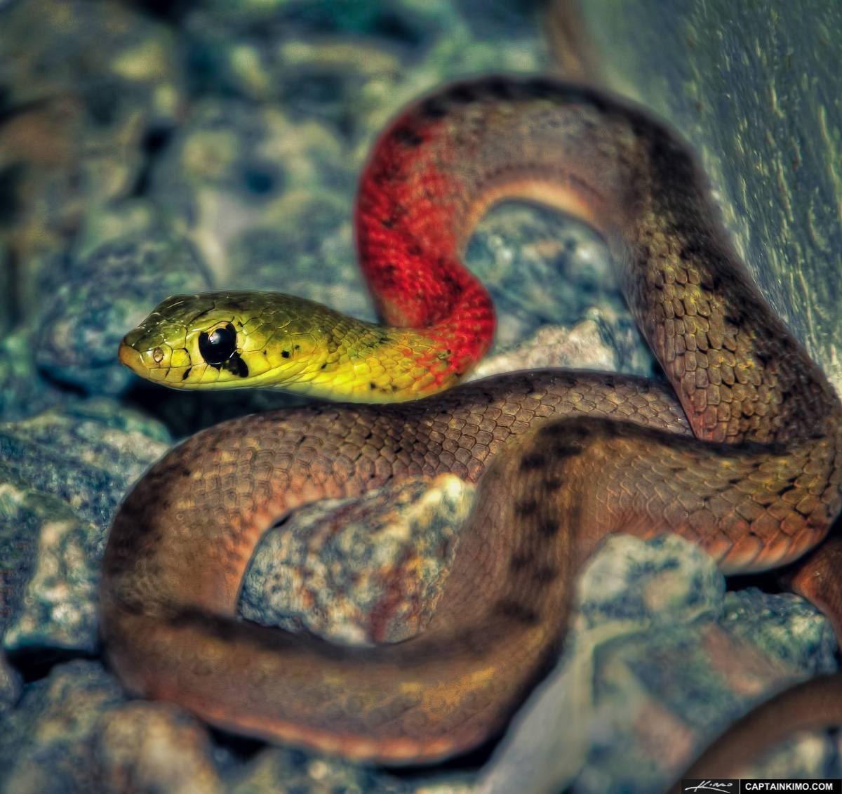 Опасные ядовитые змеи в Таиланде
