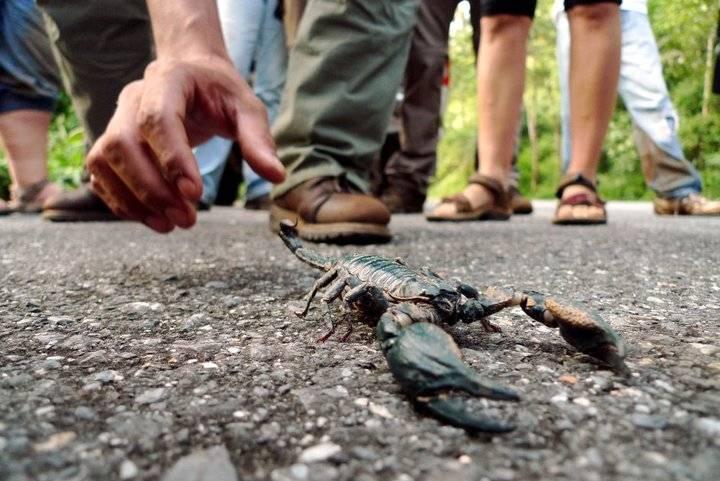 Какие насекомые в Таиланде опасны и ядовиты