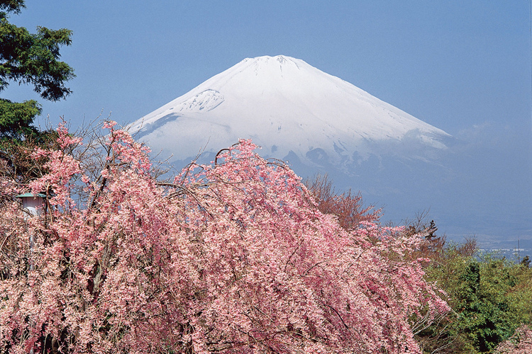 что посмотреть в японии самостоятельно