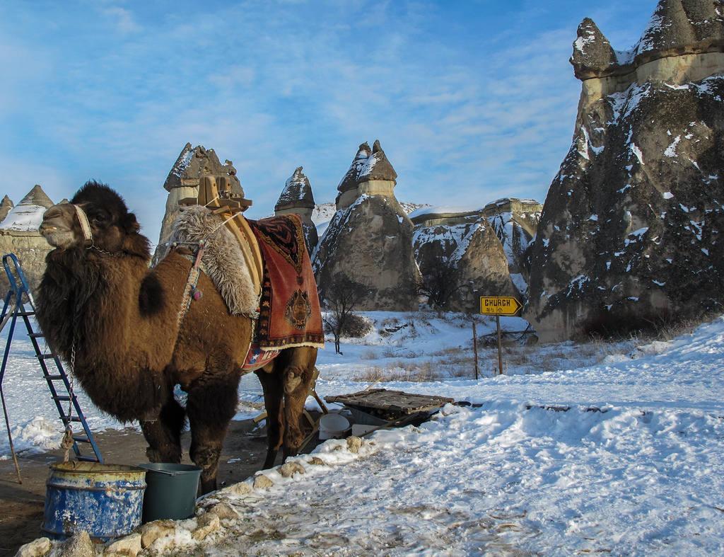 Отзывы туристов об отдыхе на Новый год в Турции